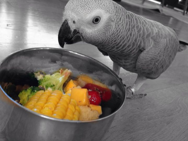 African Grey Parrots Diet & Feeding