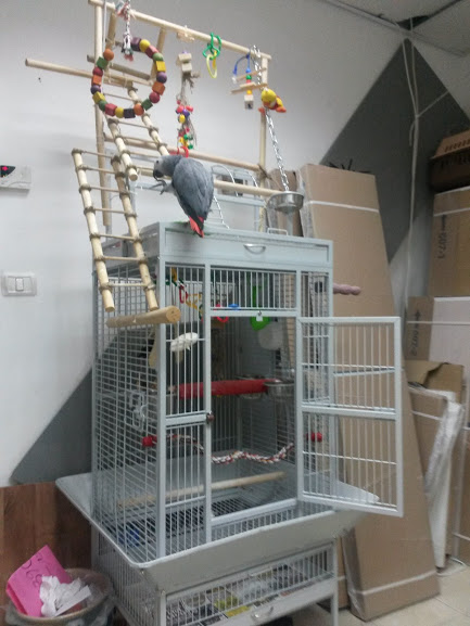 Tip to Buy African Gray Parrot Cage