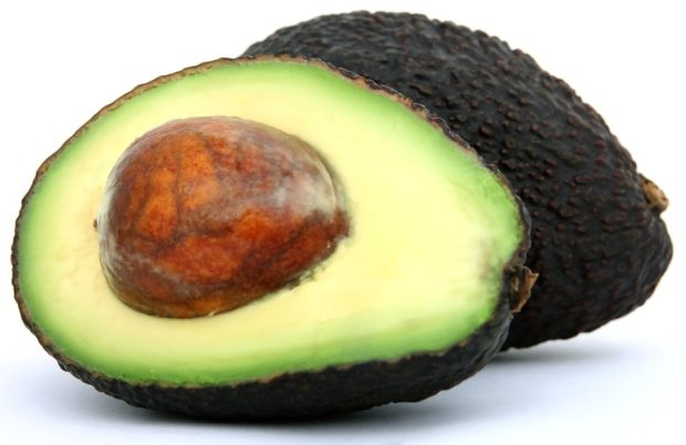 Avacado toxic foods for african Grey Parrots