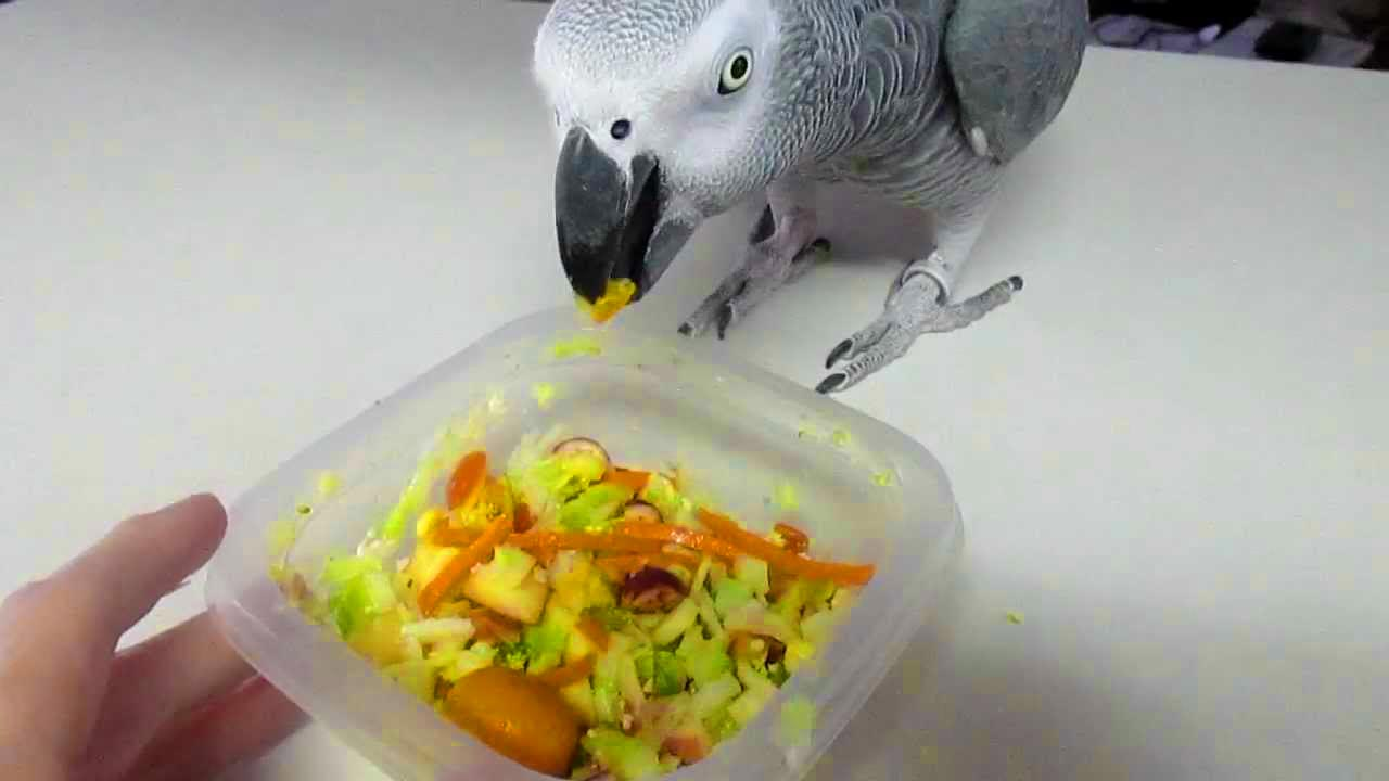 African Grey Parrot – Food, Supplements and Toxics